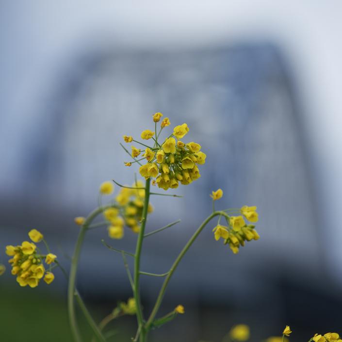 bloem aan de Lek